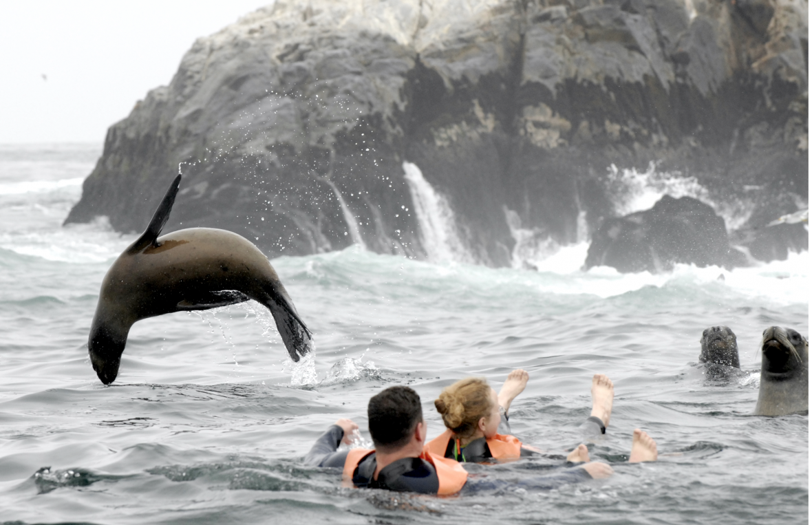 more than 8000 sea lions swimming with you
