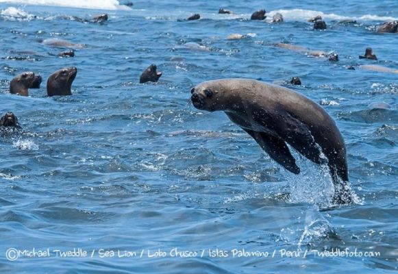 Visit to the colony of sea lions in Lima
